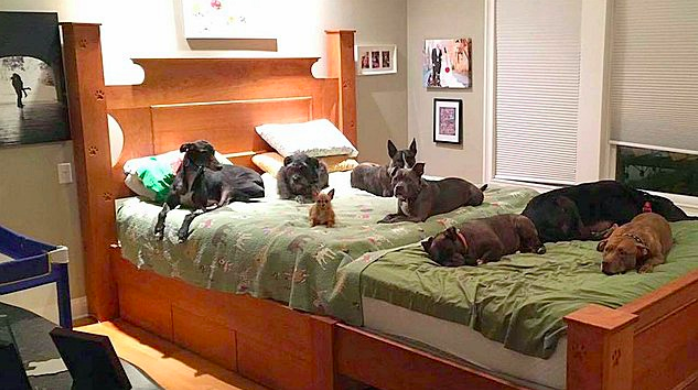 Couple Custom-Builds 'Mega Bed' So All 8 Of Their Rescue Dogs Can Sleep With Them