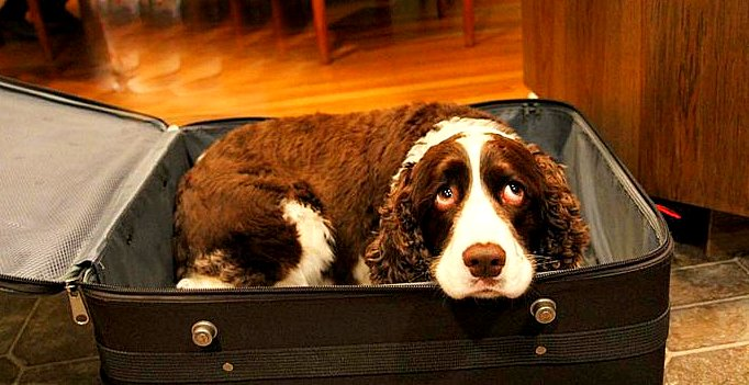 10-8-15-man-sneaks-dog-in-suitcase-to-see-wife-in-hospital1