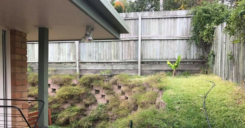 People Can't Find The Hidden Snake In The Backyard, And It ...